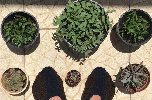 Slippers, with Ruta Dzikaraite